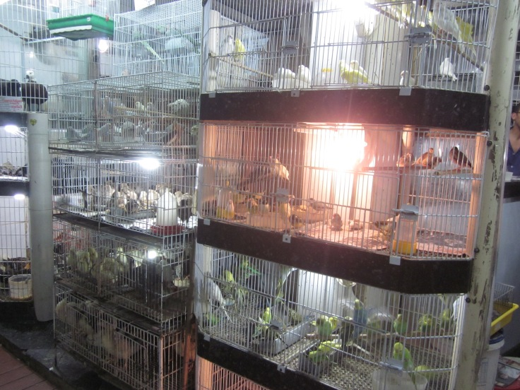 The municipal market is also home to millions of caged birds Belo Horizonte, Brazil, Mar 2014